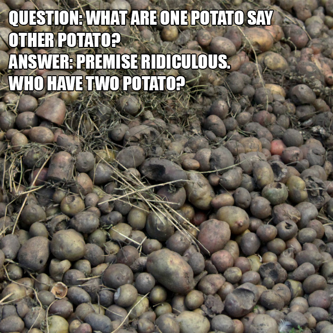 Question: What are one potato say other potato? Answer: Premise ridiculous. Who have two potato?