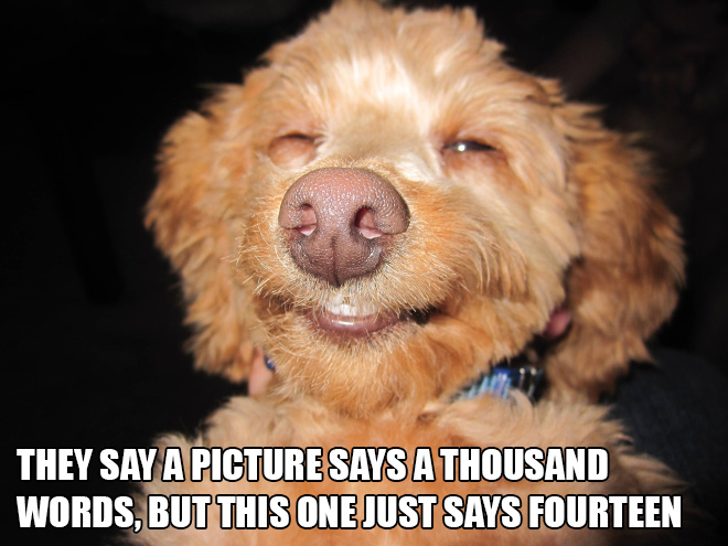Silly Stuff Written on Silly Animal Pictures