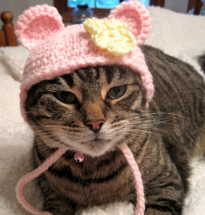 Pics Of Sad Cats In Hats