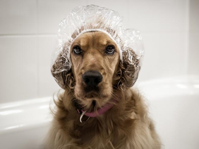 Dogs Enjoying a Bath
