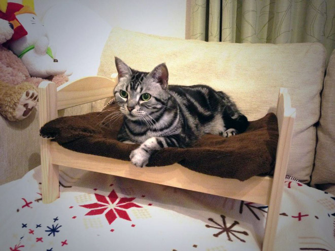 Cats who have shamelessly invaded doll beds for Ikea lettino bambole