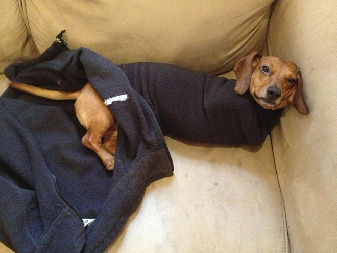 Dogs Who Have Just Made Poor Life Choices