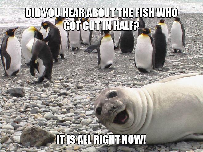 Seal Jokes