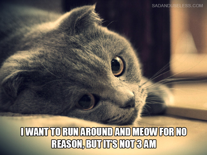 cat thoughts Some are not in order, sorry about that all rights go to nickeloden enjoy.