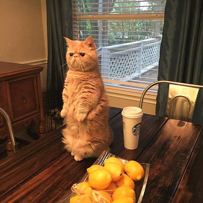Meet George The Human Cat Who Prefers Standing On Two Legs