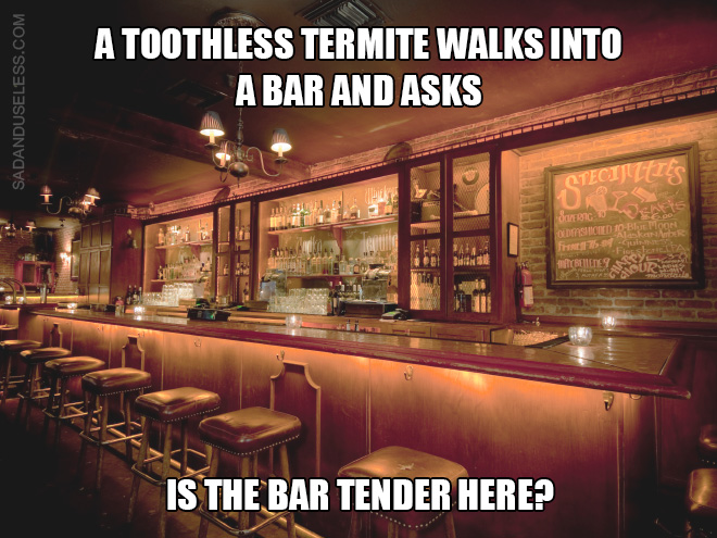 "A toothless termite walks into a bar and asks: ""Is the bar tender here?"""