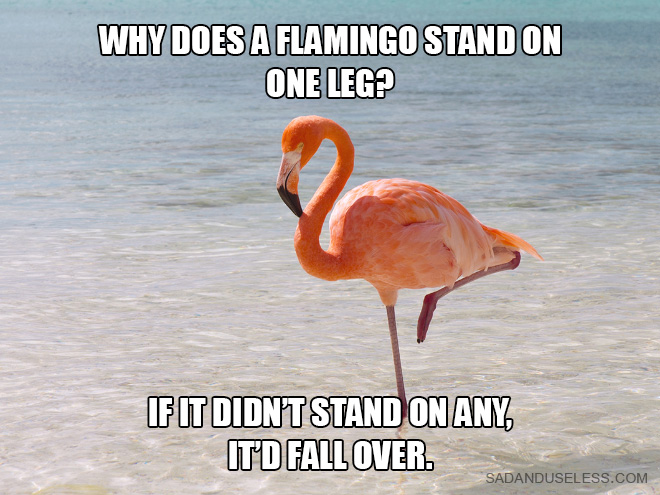 Why does a flamingo stand on one leg? If it didn't stand on any, it'd fall over.