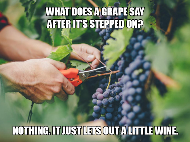 What does a grape say after it's stepped on? Nothing. It just lets out a little wine.