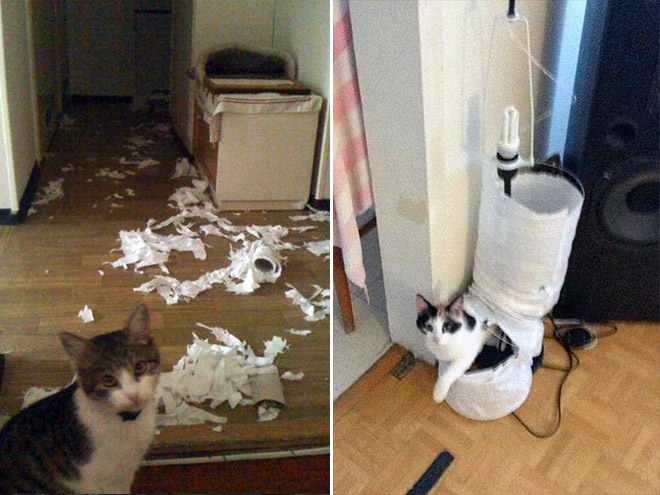 innocent cats that didn�t do it