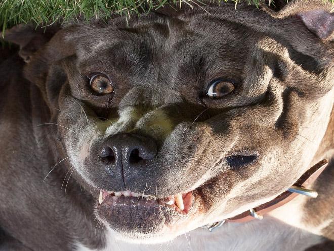 Upside Down Dogs