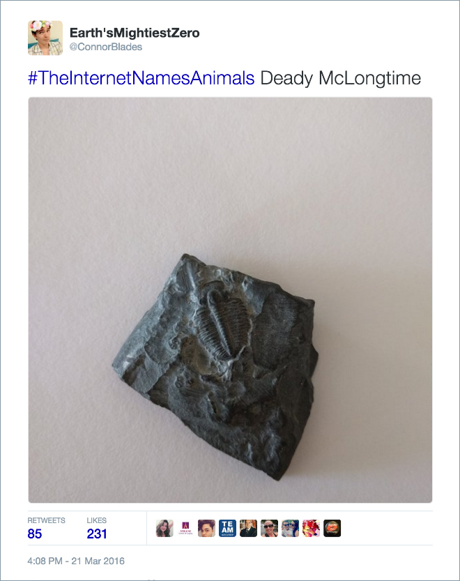 internet hilariously renames animals using theinternetnamesanimals