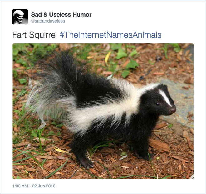 Internet Hilariously Renames Animals Using