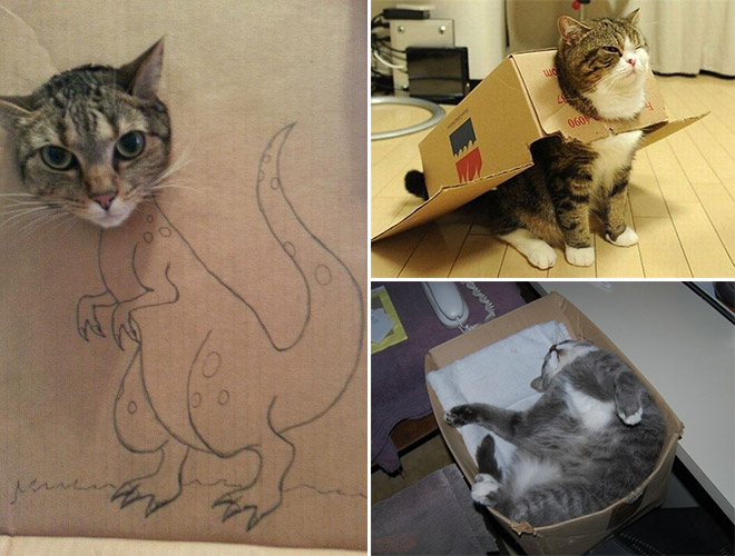Cats Are Weird Aww Reddit Com