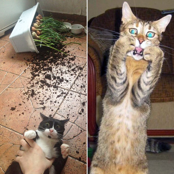 Hilariously Startled Cats
