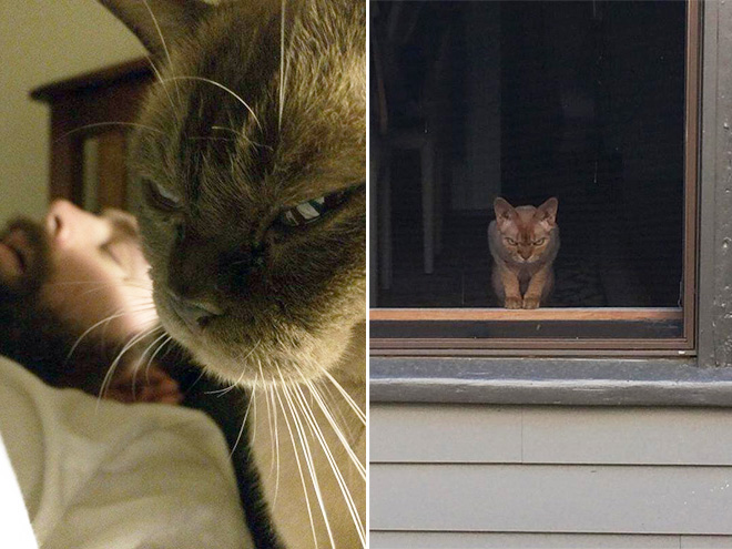 Pissed Off Cats That Definitely Want You Dead