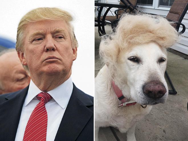 famous-dog2.jpg