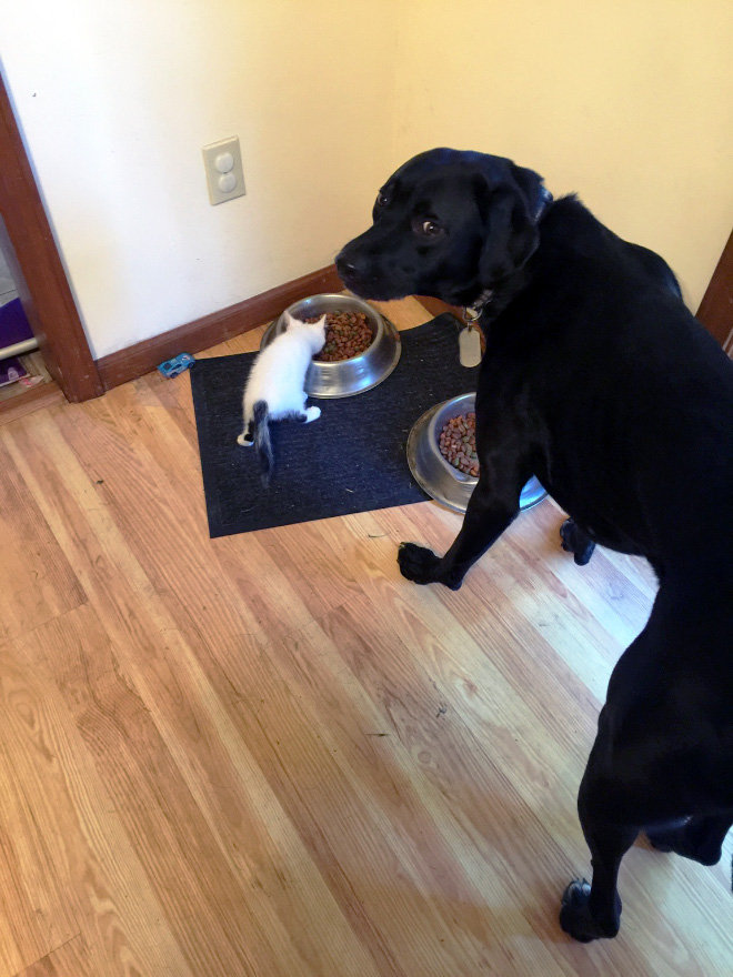 Dogs Intimidated By Cats