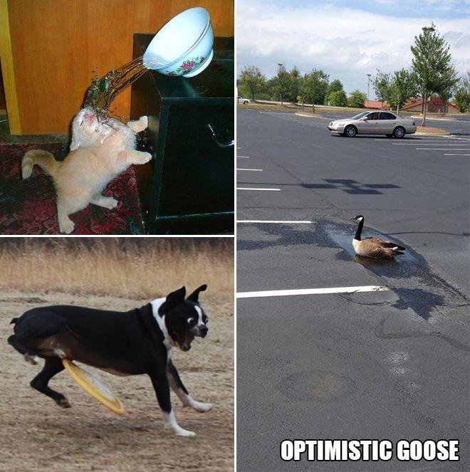 Funniest Animal Fails