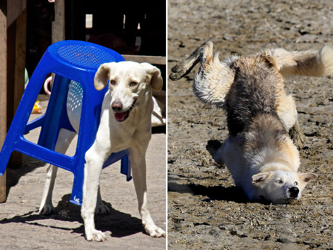 Funny Dog Fails That'll Make You Feel Guilty For Laughing