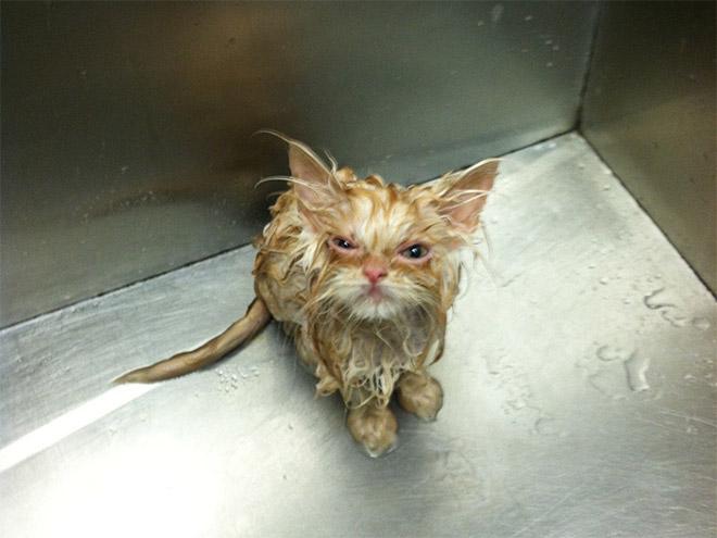 angry-kitten2.jpg