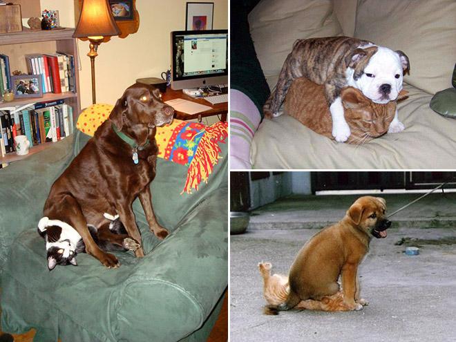 More Popular Dogs Or Cats