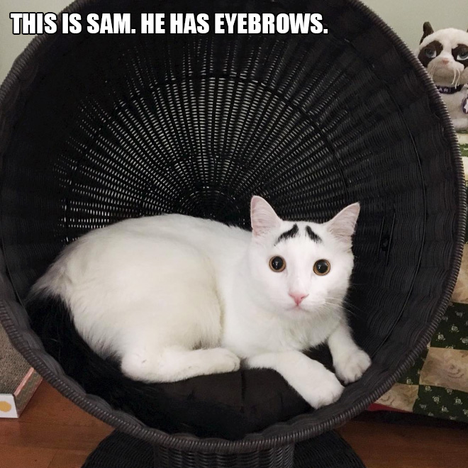 Image of: Animals Sad And Useless Humor Cats With The Funniest Fur Markings Ever