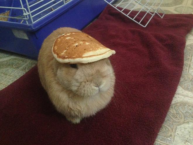 random stuff on a rabbit