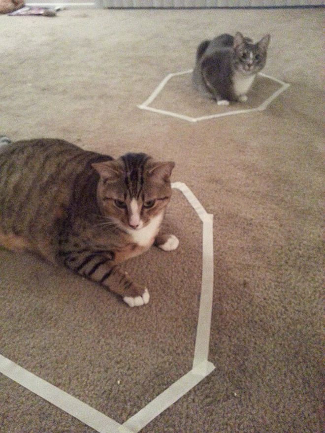 Cat Circles The Phenomenon In Which A Cat Will Always Sit