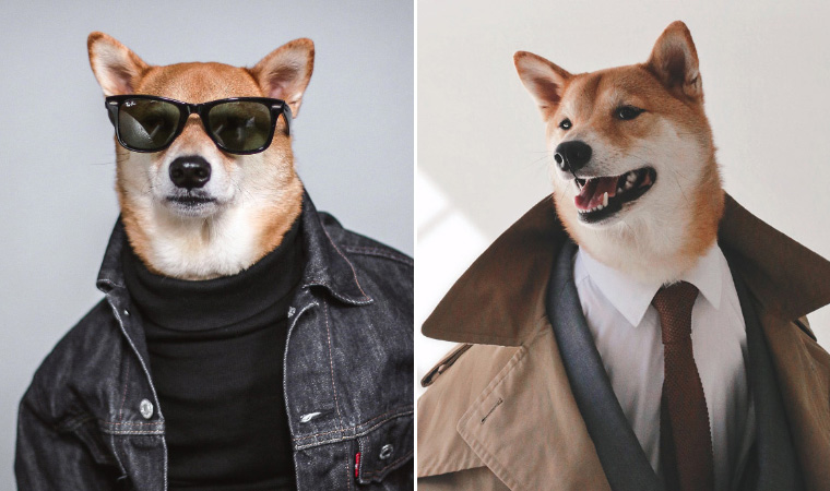 Menswear Dog: The Most Stylish Dog In The World