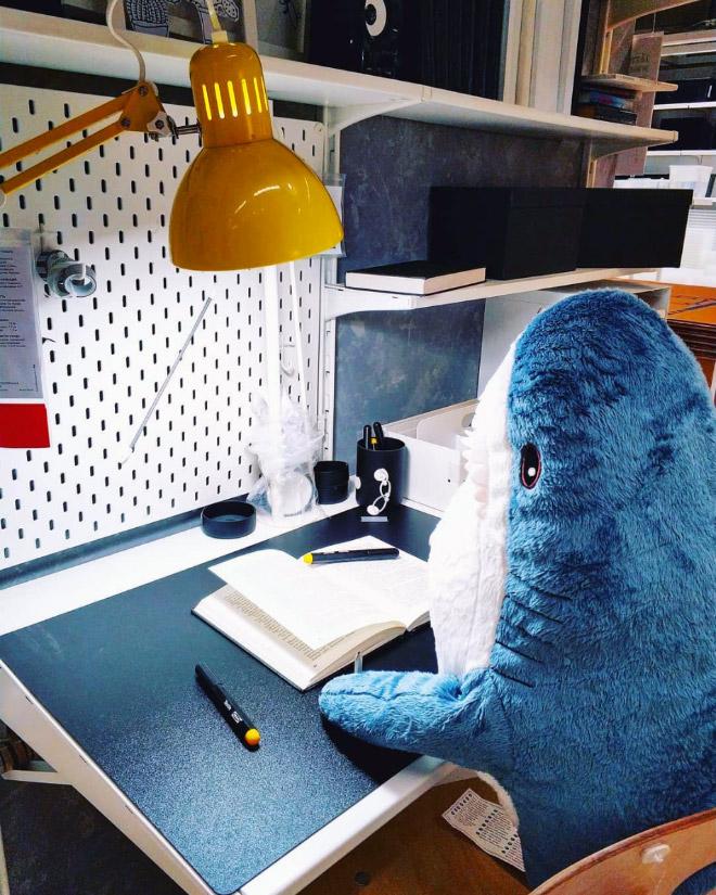 Shark studying.