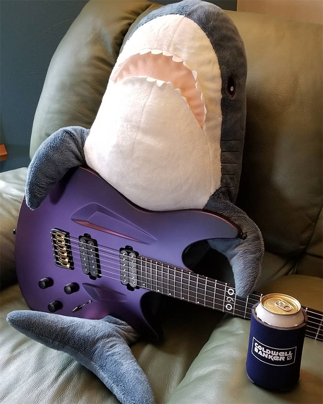 Shark playing guitar.