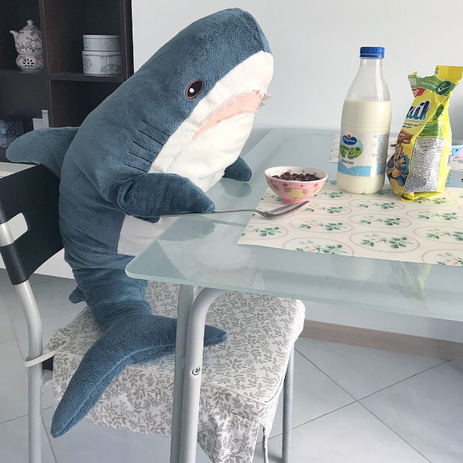 Shark eating cereal.
