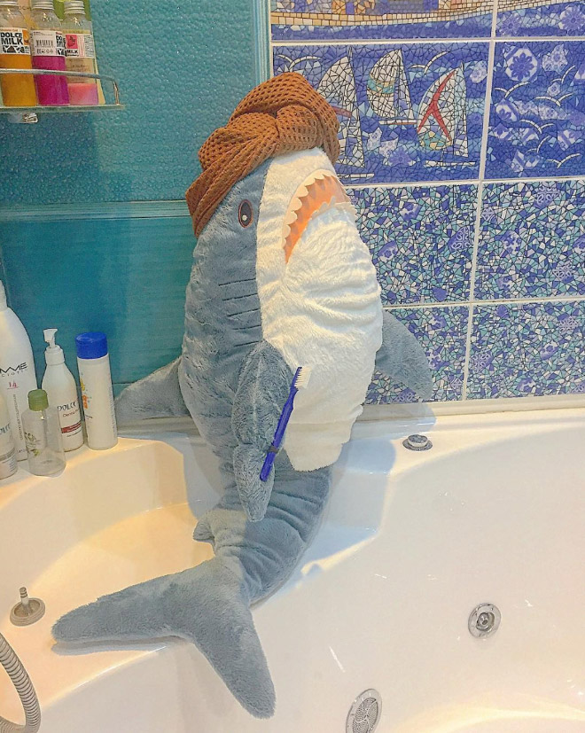 Shark taking a bath.