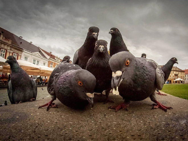 90s rap album cover done by pigeons.