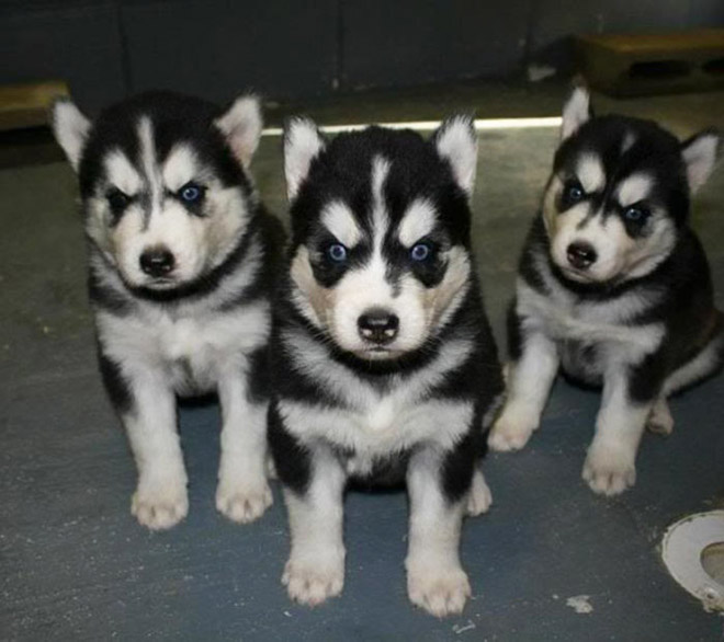Heavy metal puppies.