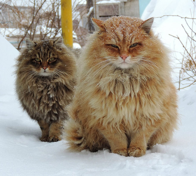 Finnish cat metal band.