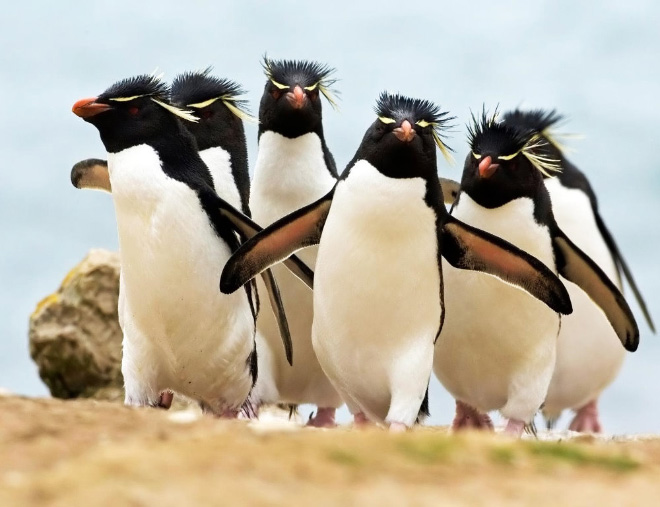The electronic rock penguins.