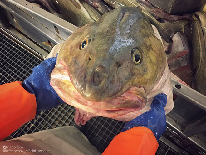 Weird smiling deep sea fish.