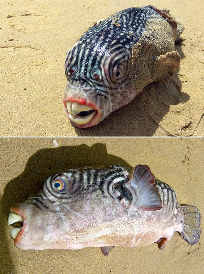 Weird fish with awkward teeth.