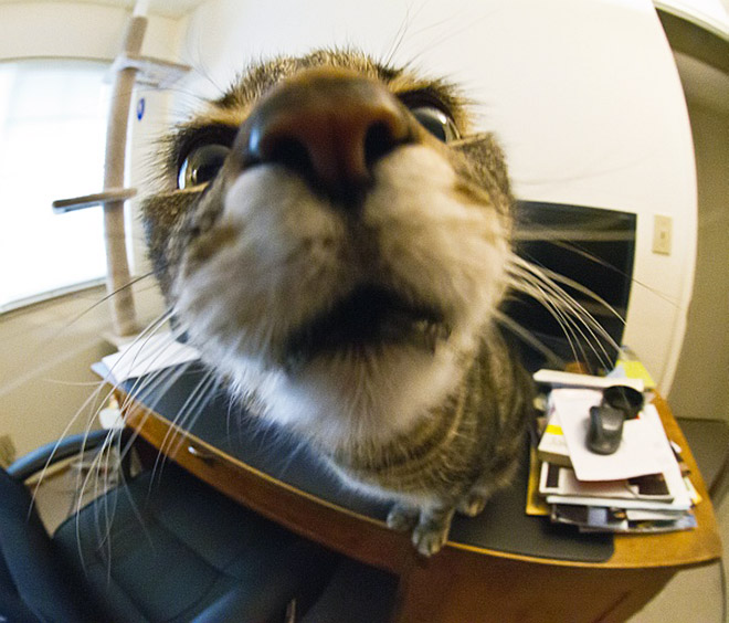 Cute cat nose closeup photo.