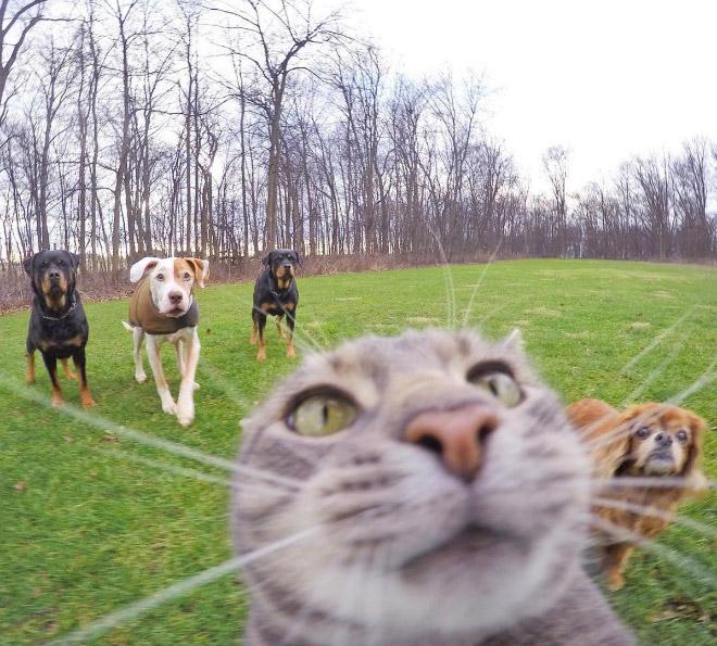 Funny cat closeup photo.