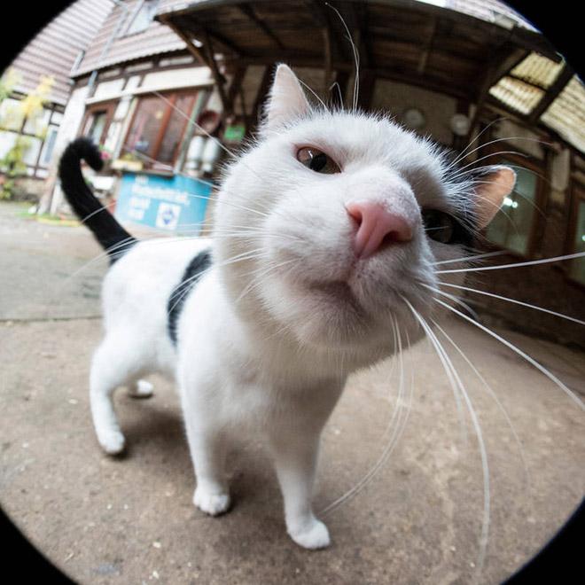 Curious cat bumping into camera.