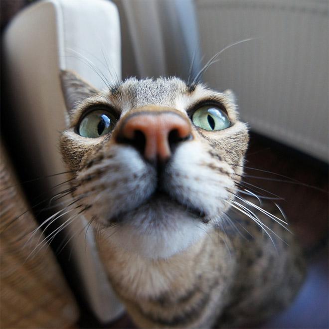 Curious cat closeup photo.