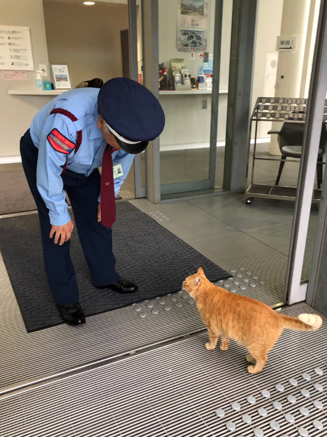 Ginger cat refused to enter a museum.