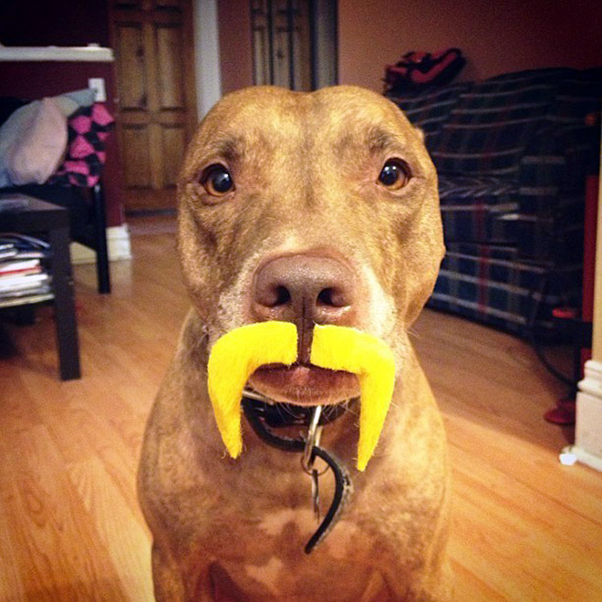 Beautiful yellow mustache.