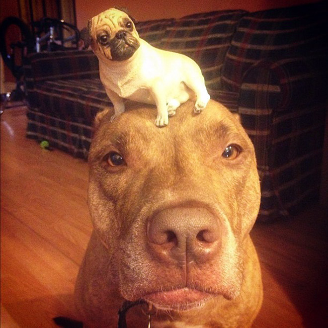 Dog with another dog on the head.