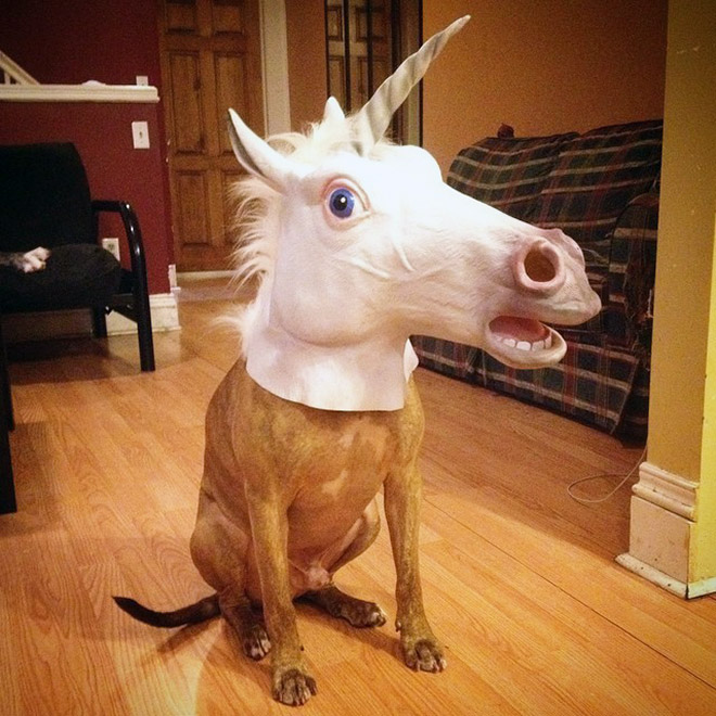 Proof that unicorns are real.