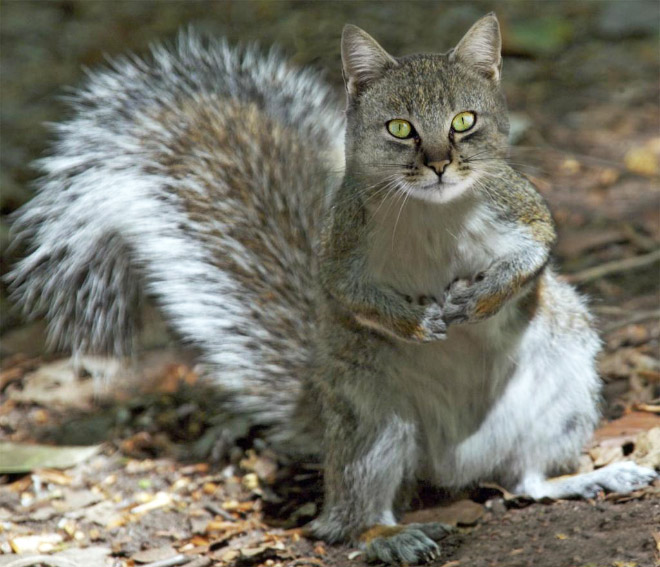 Squirrel cat.