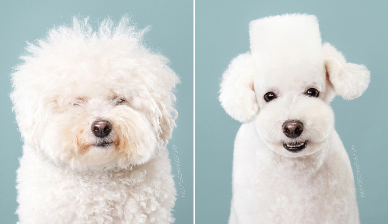 Japanese Dog Grooming: Before & After