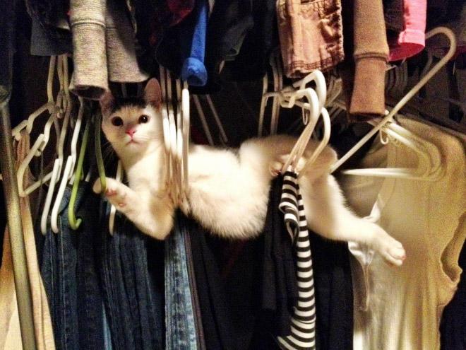 Cat vs. coat hangers.